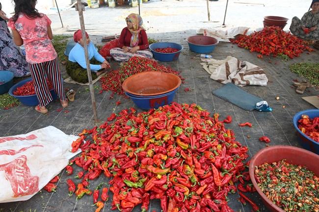 Türkiye'de zengin yemek kültürüyle dikkati çeken Şanlıurfa mutfağının demirbaşlarından isot, hummalı bir çalışma sonucu tüketime hazır hale gelirken, ev kadınlarına da ekmek kapısı oluyor.