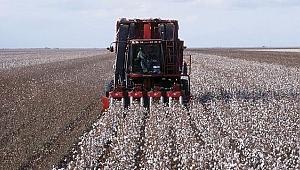 """""""Makineli hasat"""" pamuk üreticisinin yüzünü güldürüyor"""