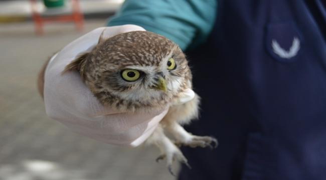 Polisin dikkati yaralı baykuşu ölümden kurtardı