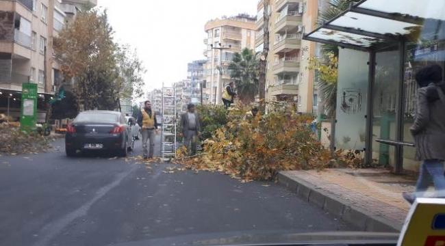 Belediyeden ağaç budama çalışması