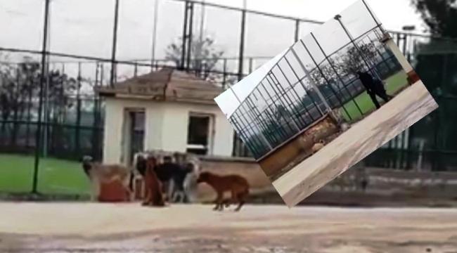 Bu köpekler illa birilerine mi saldırsın ?