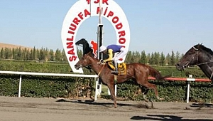 Şanlıurfa'da at yarışı zengin etti