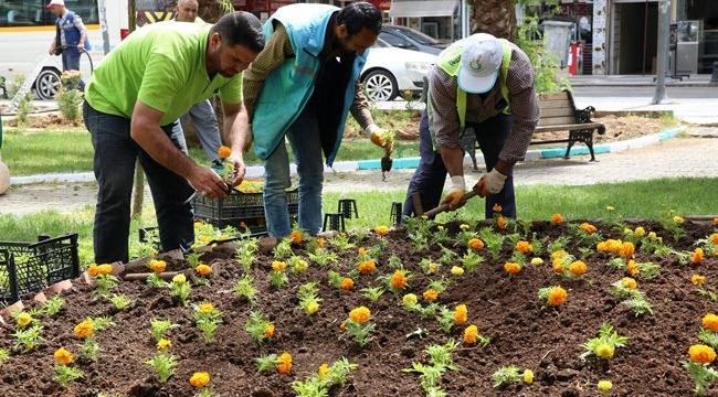 Haliliye Belediyesi Parkları Güzelleştiriyor