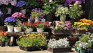 İlçe Belediyesi Bir Yılda 8.5 Milyonluk Çiçek Almış