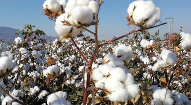 Urfa'da Preseli Pamuk 10,80 liradan satıldı