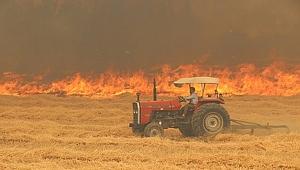 Şanlıurfa'da 125 dönümlük alandaki ekinler kül oldu
