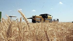 Urfa'da Buğday 1,78 Liradan Satıldı
