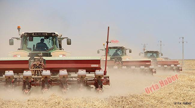 Ceylanpınar'da hasat bitmeden ekim başladı
