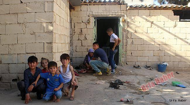 Suriye'li ninenin 7 torunuyla yaşam mücadelesi