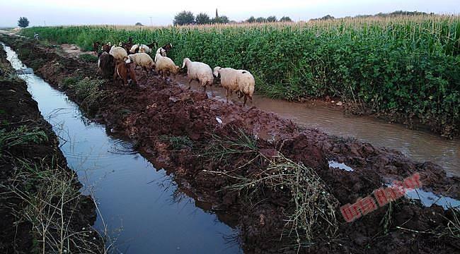 """""""Vahşi sulama"""" toprağa ve ürüne zarar veriyor"""