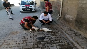 Ceylanpınar Belediyesinden sokak hayvanlarına mama desteği