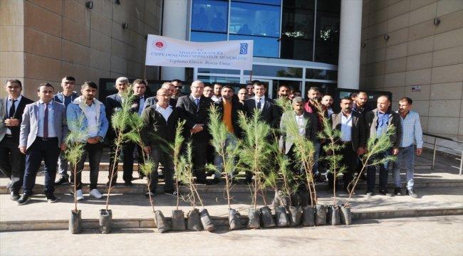 Cizre'de denetimli serbestlik yükümlülerine 250 fidan dağıtıldı