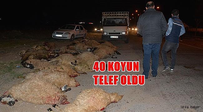 Otomobil koyun sürüsüne çarptı