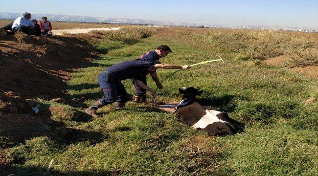 Şanlıurfa'da bataklığa düşen inek kurtarıldı