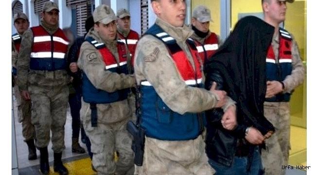 Urfa'da Koyun Hırsızları Tutuklandı