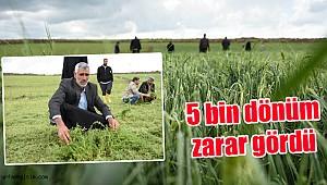 Urfa'da Dolu yağışı tarım arazilerini vurdu