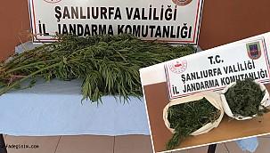 Urfa'da uyuşturucu operasyonu: 5 gözaltı