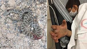 Urfa'da yılanın ısırdığı çocuk yoğun bakımda