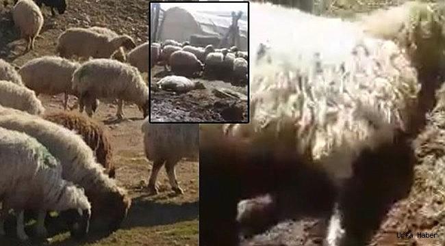 Parası olmayan çiftçinin hayvanlarını ölüme terk ettiler iddiası