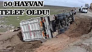 Havyan taşıyan kamyonet devrildi!