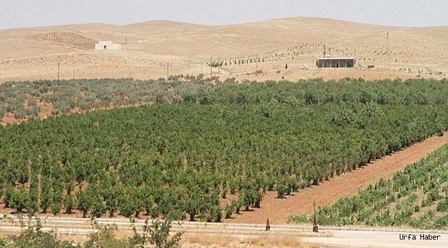 Şanlıurfa'da orman alanlarına girişler yasaklandı